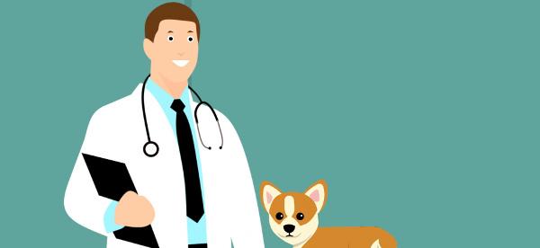 animals-clinic